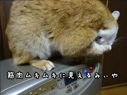 猫の慢性腎不全 点滴