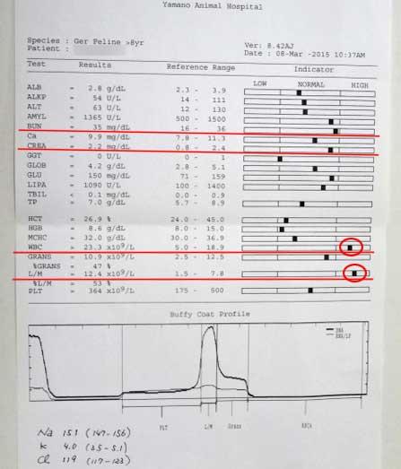 猫の慢性腎不全 血液検査結果