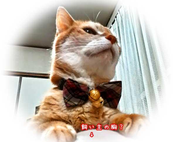 猫の慢性腎不全診断から4ヶ月