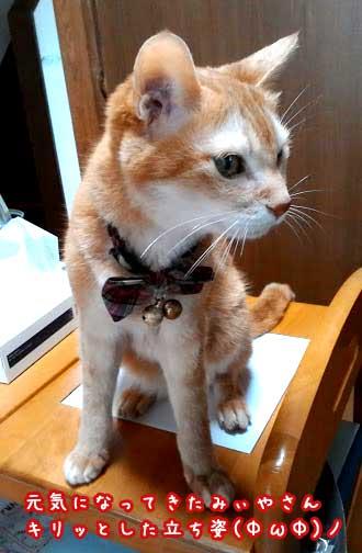 猫の慢性腎不全に水素水が効いてきた?