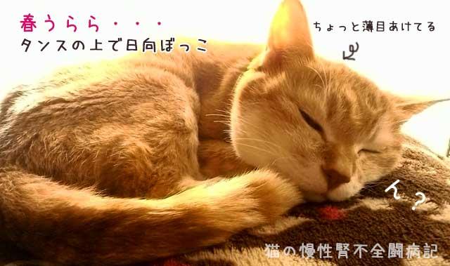 猫の慢性腎不全闘病記ブログ