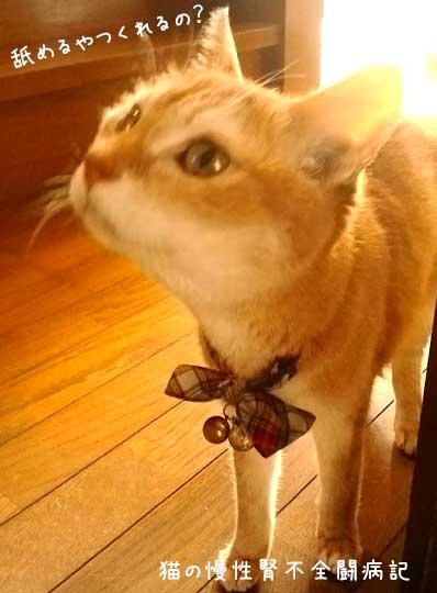 猫 慢性腎不全闘病中