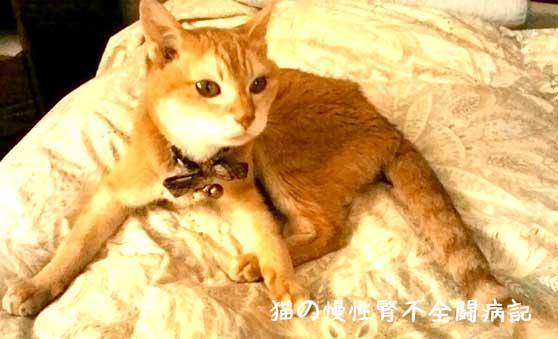 猫の慢性腎不全闘病中