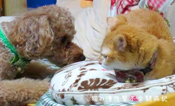 老猫と犬は仲よくなれる?