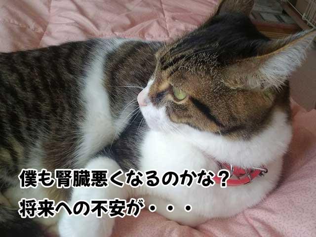 腎不全への不安を感じてる猫
