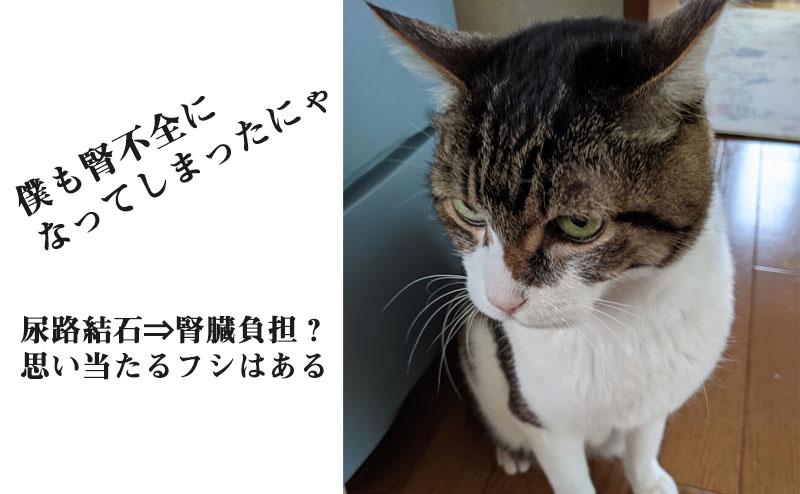 実家の猫が慢性腎不全に
